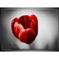 Glas schilderij Tulp | Rood, Wit, Grijs