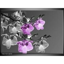 Glas schilderij Orchidee | Grijs, Paars, Zwart