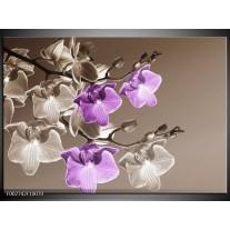 Glas schilderij Orchidee | Bruin, Paars