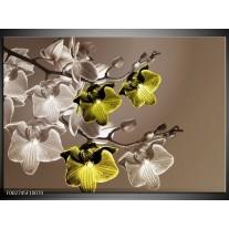 Glas schilderij Orchidee | Groen, Bruin