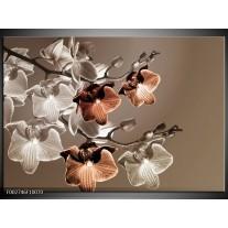 Glas schilderij Orchidee | Grijs, Bruin