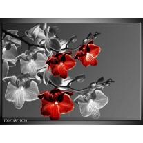 Glas schilderij Orchidee | Zwart, Rood, Grijs
