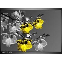 Glas schilderij Orchidee   Zwart, Geel, Grijs
