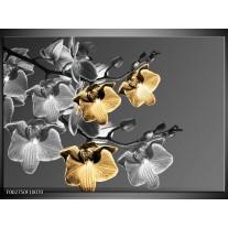 Glas schilderij Orchidee | Zwart, Oranje, Grijs