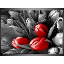 Glas schilderij Orchidee | Grijs, Rood, Zwart