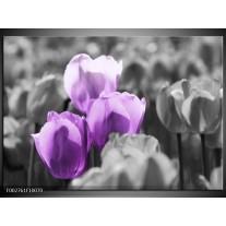 Glas schilderij Tulpen | Paars, Grijs, Zwart