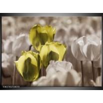 Glas schilderij Tulpen | Bruin, Groen, Zwart