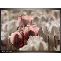 Glas schilderij Tulpen | Bruin, Grijs