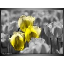 Glas schilderij Tulpen | Geel, Grijs