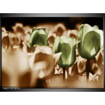 Glas schilderij Tulpen | Bruin, Groen, Wit