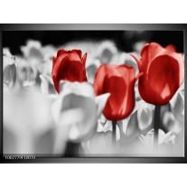 Glas schilderij Tulpen | Rood, Grijs, Wit