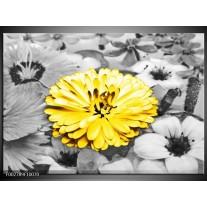 Glas schilderij Gerbera | Geel, Zwart
