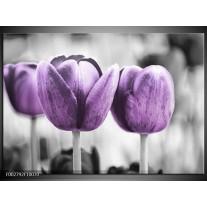 Glas schilderij Tulpen | Paars, Grijs, Wit