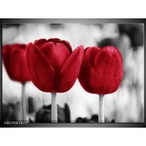 Glas schilderij Tulpen | Rood, Wit, Grijs