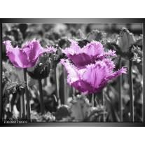 Glas schilderij Tulpen | Paars, Wit, Grijs