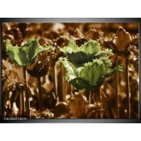 Glas schilderij Tulpen | Groen, Bruin