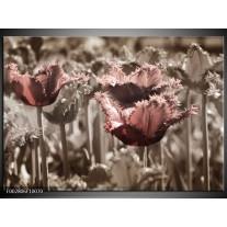 Foto canvas schilderij Tulpen | Groen, Bruin