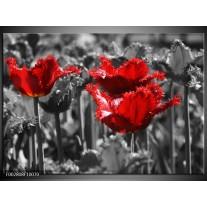 Glas schilderij Tulpen | Rood, Grijs
