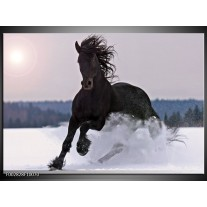 Foto canvas schilderij Paard | Wit, Zwart, Grijs