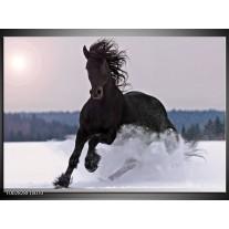 Glas schilderij Paard | Wit, Zwart, Grijs