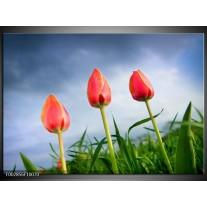 Glas schilderij Tulpen | Rood, Blauw, Groen