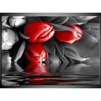 Glas schilderij Tulpen | Rood, Grijs, Zwart