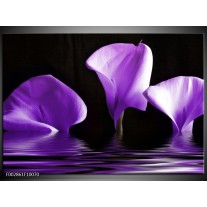 Glas schilderij Bloem | Paars, Zwart