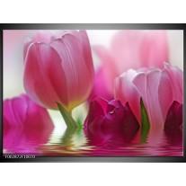 Glas schilderij Tulpen | Roze, Wit, Groen