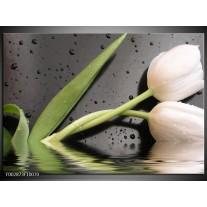 Glas schilderij Tulpen | Wit, Groen, Grijs