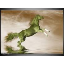 Foto canvas schilderij Paard | Groen, Sepia, Bruin