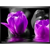 Glas schilderij Tulpen | Paars, Zwart, Grijs