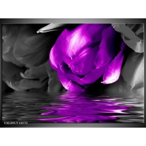 Foto canvas schilderij Tulpen   Paars, Grijs, Zwart