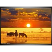 Foto canvas schilderij Zebra | Geel, Oranje, Bruin