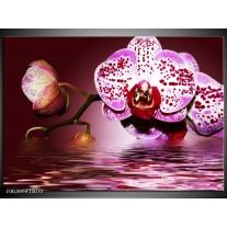 Glas schilderij Orchidee | Paars, Roze, Rood