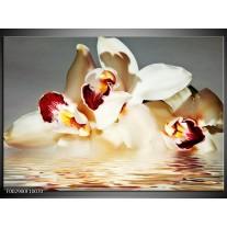 Glas schilderij Orchidee | Wit, Grijs, Rood