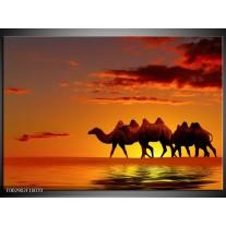 Glas schilderij Natuur | Oranje, Geel, Bruin