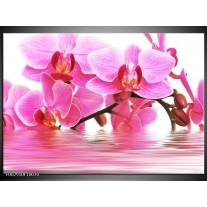Glas schilderij Orchidee | Roze, Wit