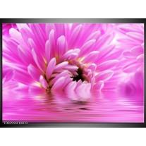 Glas schilderij Bloem | Roze, Wit