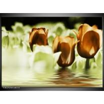 Glas schilderij Tulpen | Bruin, Groen