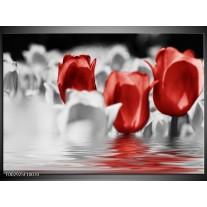 Glas schilderij Tulpen | Grijs, Rood