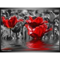 Glas schilderij Tulpen | Zwart, Rood, Grijs