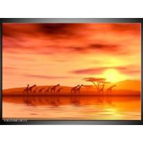 Glas schilderij Afrika | Oranje, Geel, Bruin