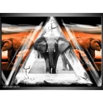 Glas schilderij Olifant | Oranje, Wit, Grijs