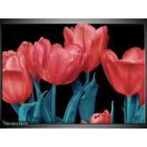 Glas schilderij Tulpen | Rood, Blauw, Zwart
