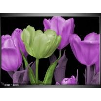 Glas schilderij Tulpen | Paars, Groen, Zwart