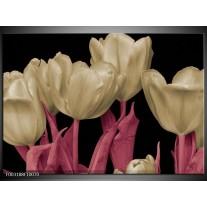 Glas schilderij Tulpen | Wit, Zwart, Roze