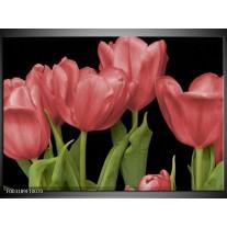 Glas schilderij Tulpen | Rood, Groen, Zwart