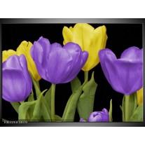 Glas schilderij Tulpen | Paars, Geel, Groen