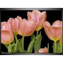 Glas schilderij Tulpen | Roze, Groen, Zwart