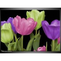 Glas schilderij Tulpen | Paars, Groen, Roze